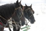 Sleigh Ride - 2013 - Jaffery, NH